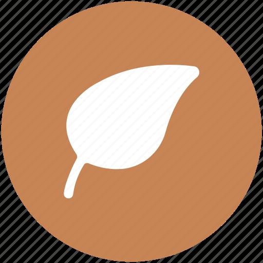 ecology, foliage, greenery, leaf, nature, tree leaves icon