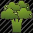 broccoli, dietary, green, healthy, vegan icon