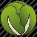 cabbage, green, healthy, nutrient, vegan icon