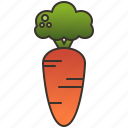 carrot, healthy, orange, organic, root
