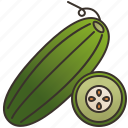 cucumber, dietary, green, healthy, salad