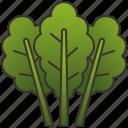 green, healthy, kale, leaf, salad icon