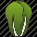 green, healthy, lettuce, salad, vegetable icon