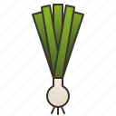 culinary, green, herb, leek, scallion