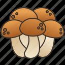 brown, edible, fungi, mushroom, shimeji icon