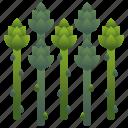 asparagus, diet, green, shoot, vegetable