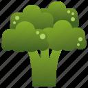 broccoli, dietary, green, healthy, vegan