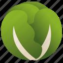 cabbage, green, healthy, nutrient, vegan