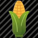 agriculture, cob, corn, food, grain
