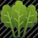 green, healthy, kale, leaf, salad