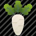 asia, daikon, radish, root, white