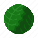 cabbage, food, healthy, vegetable, fresh icon