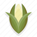 cooking, corn, food, healthy, kitchen, restaurant, vegetable icon