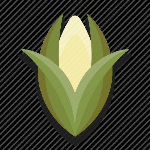 corn, food, healthy, vegetable icon