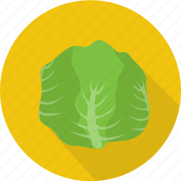 agriculture, cabbage, fresh, green, organic, vegetables icon