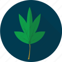 agriculture, cassava, leaf, leaves, plant, tropical, vegetables icon