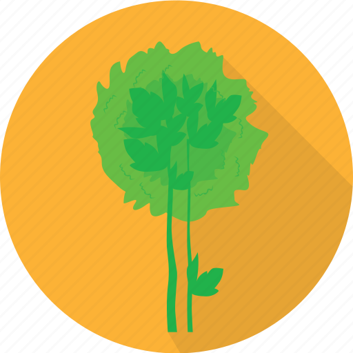 agriculture, celery, green, plant, vegetables icon