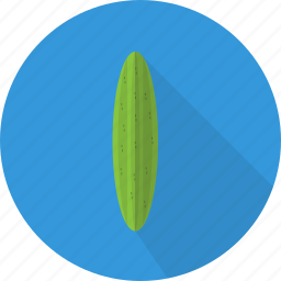 cucumber, food, fresh, organic, plant, vegetables icon