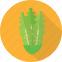 fresh, green, lettuce, nature, organic, plant, vegetables icon