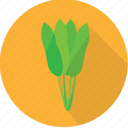 hyacinth, leaves, nature, pest, plant, vegetables, water icon