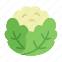 cauliflower, colour, food, garden, green, leaf, vegetable icon