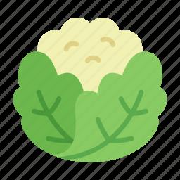 cauliflower, colour, food, garden, green, leaf, vegetable icon