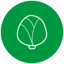 cabbage, food, ingredient, vegetables icon
