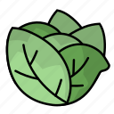 cabbage, food, fruit, vegetables icon