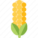 corn, food, vegetable