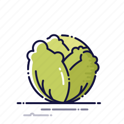 cabbage, cooking, food, kitchen, meal, plant, vegetables icon