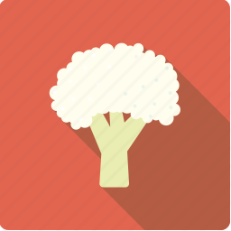 cabbage, cauliflower, food, vegetable, vegetarian icon