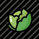 cabbage, food, healthy, ingredient, vegan, vegetable