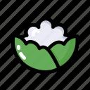 cauliflower, food, healthy, ingredient, vegan, vegetable
