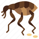 animal, animals, bugs, flea, insect, parasite