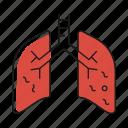 anatomy, coronavirus, covid19, lung