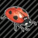 bug, lady, ladybug icon