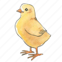 standing, spring, chick, chicken, easter, bird