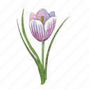 crous, flower, garden, plant, spring icon