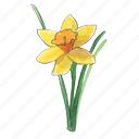 narcissus, spring, daffodil, flower icon