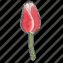 flower, garden, spring, tulip icon
