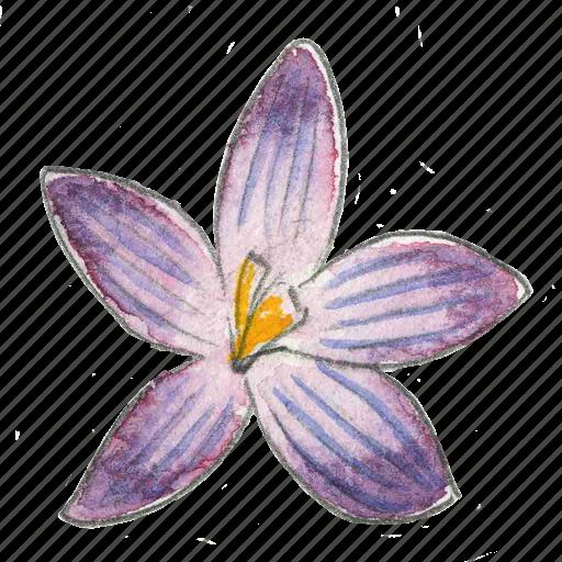 crocus, flower, garden, plant, spring icon