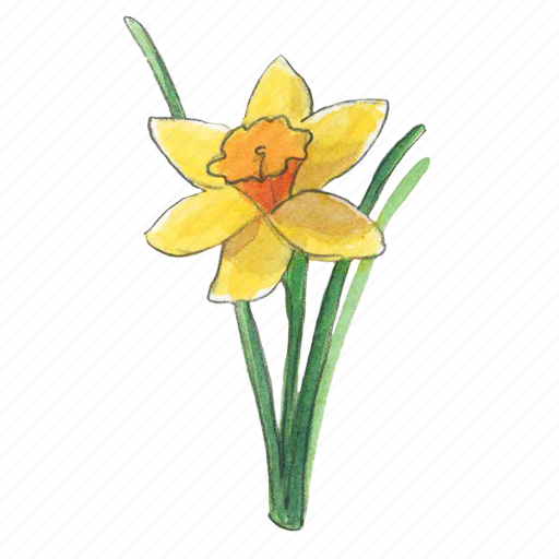 daffodil, flower, narcissus, spring icon