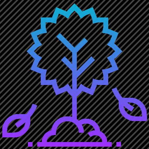 autumn, leaf, plant, season, tree, weather icon