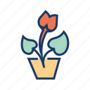 flower, garden, house plant, nature, pot plant, young plant icon