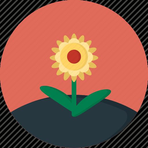 flower, spring icon