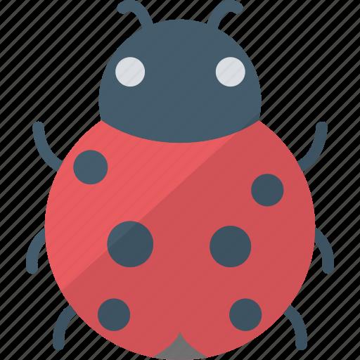 bug, insect, ladybird, malware icon