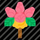 bouquet, congratulation, flower, rose