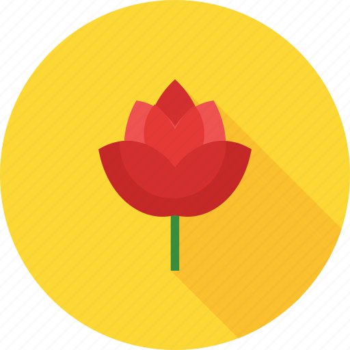 beauty, flower, gift, red, rose, roses, single icon