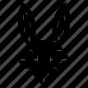 bunny, burrow, easter, hare, rabbit