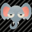 elephant, ivory, mammal, trunk, wildlife